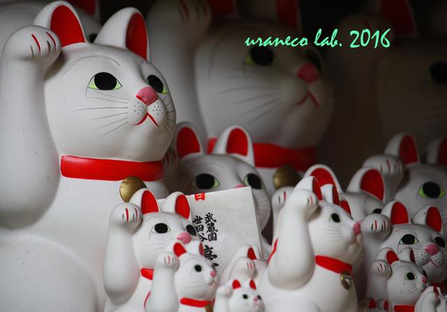 9月23日招き猫軍団