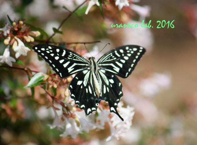 10月7日花と蝶5