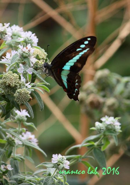 10月7日花と蝶6