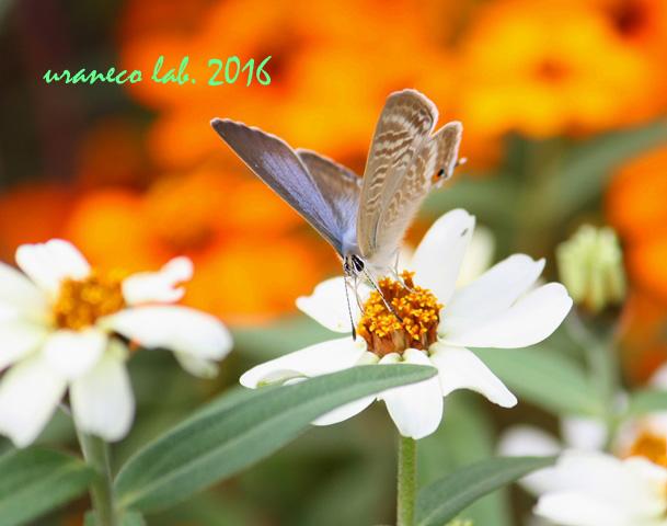 10月7日花と蝶3