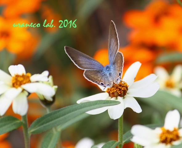 10月7日花と蝶4
