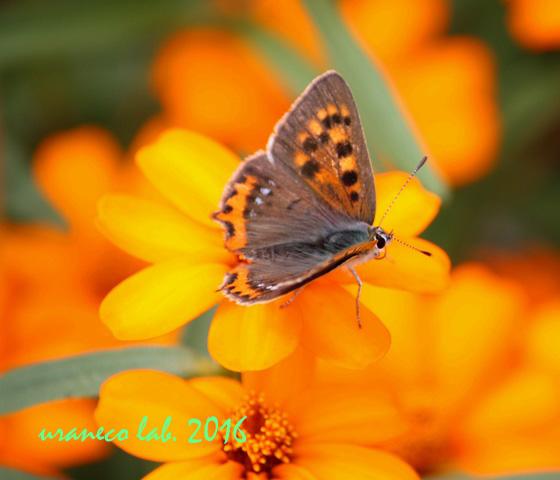 10月7日花と蝶2