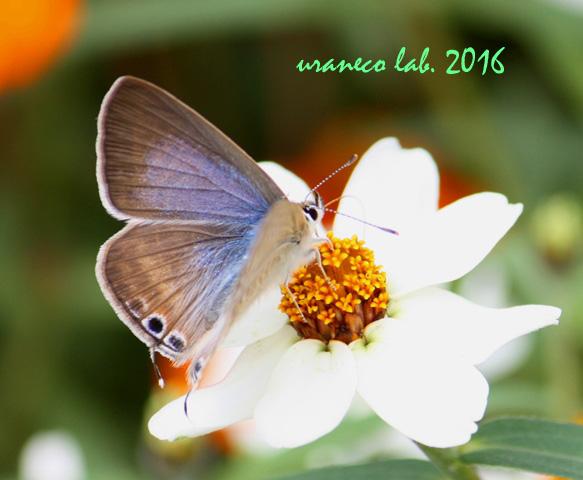 10月7日花と蝶
