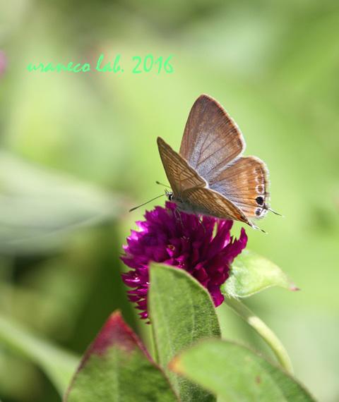 10月7日花と蝶8