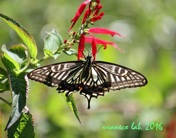 10月7日花と蝶7
