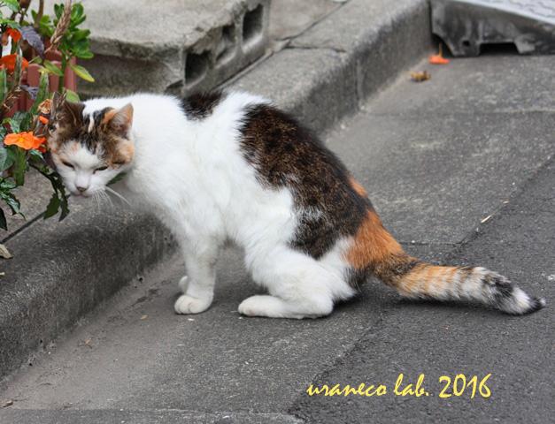 10月7日子猫3