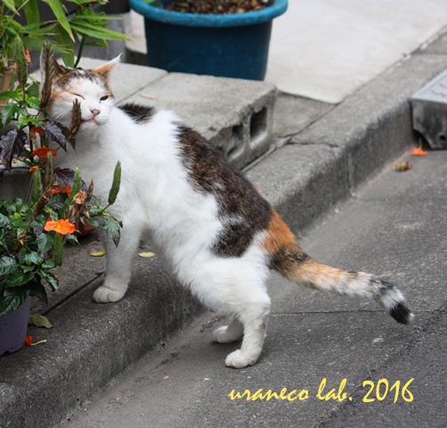 10月7日子猫4