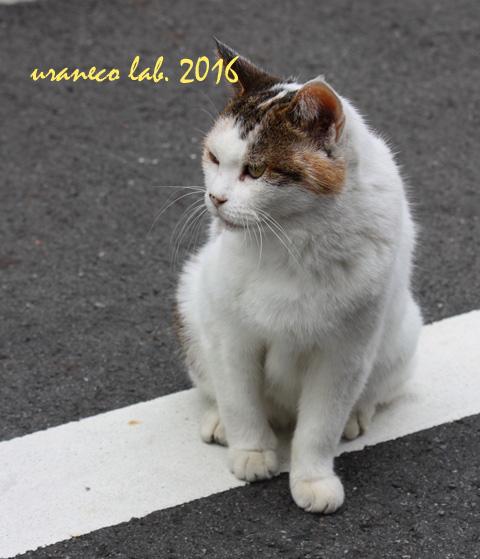 10月7日子猫