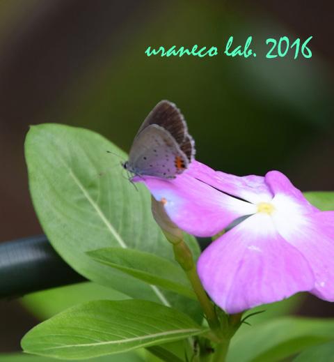 10月1日花と蝶々