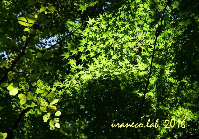10月18日木漏れ日の林4