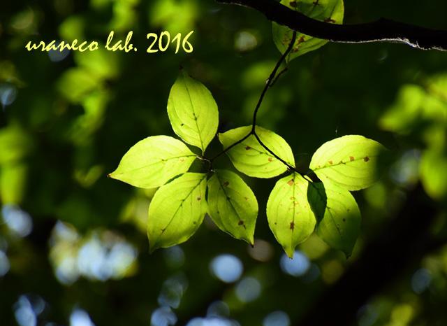 10月18日木漏れ日の林3