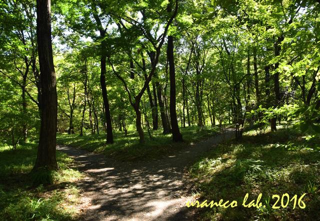 10月18日木漏れ日の林