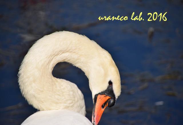 10月18日白鳥