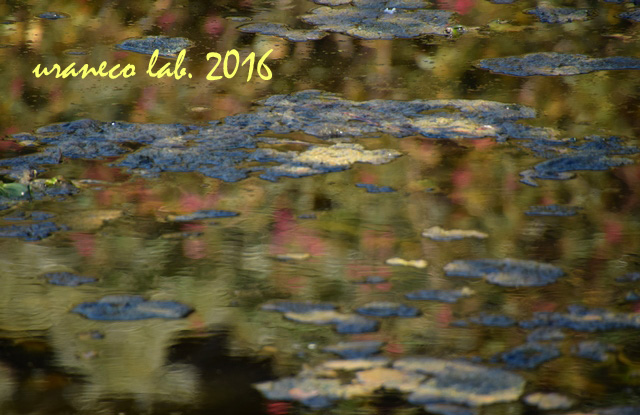 10月18日モネの池風