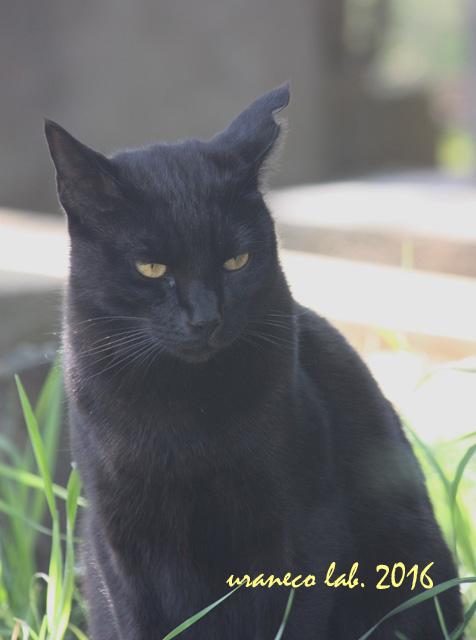 10月27日黒猫2