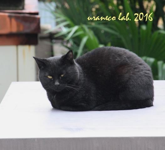 10月27日黒猫