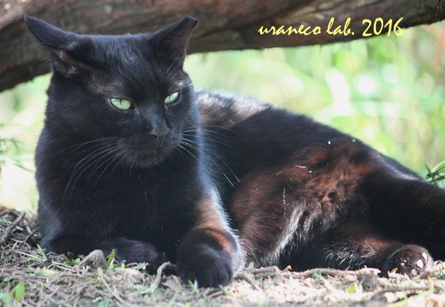 10月27日黒猫4