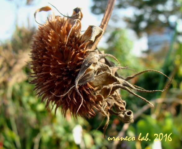 10月25日向日葵の残骸