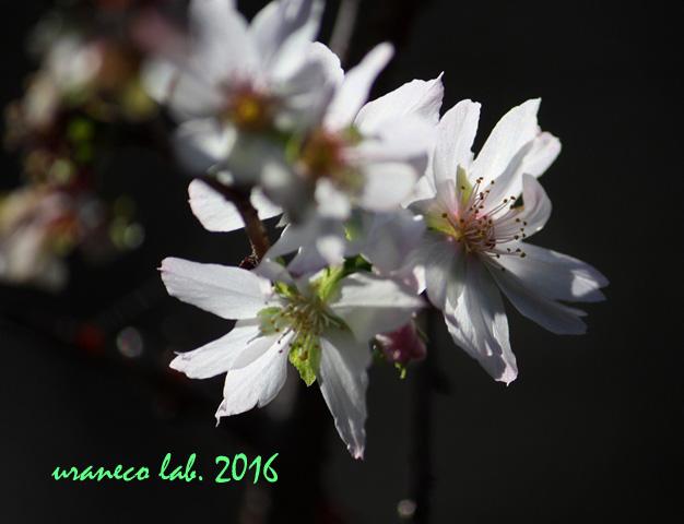 10月27日十月桜