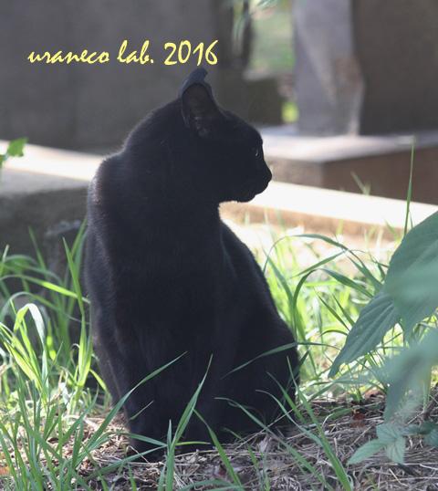 10月27日黒猫3