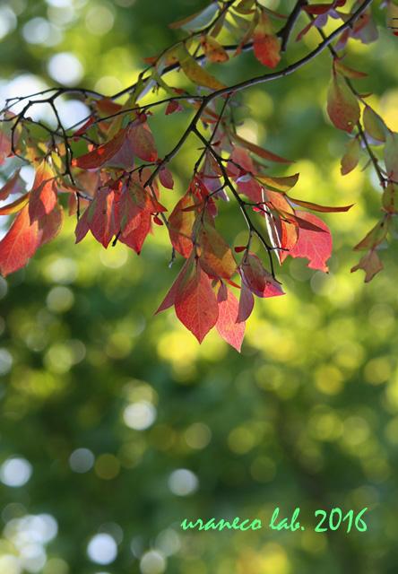 10月27日玉ぼけ紅葉