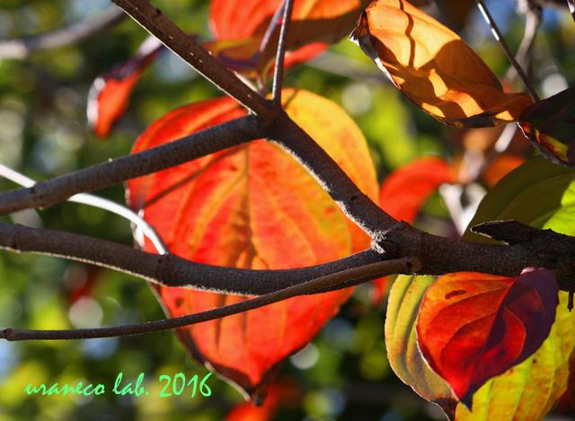 11月1日木々色づく5