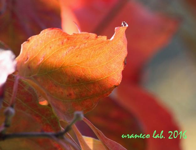 11月1日木々色づく8