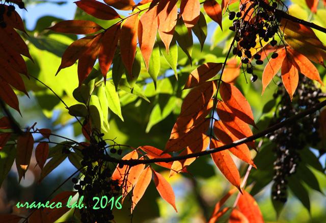 11月1日木々色づく6
