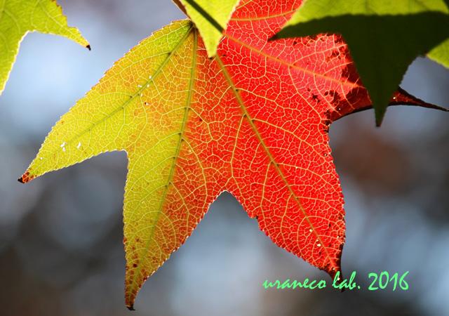11月1日木々色づく7