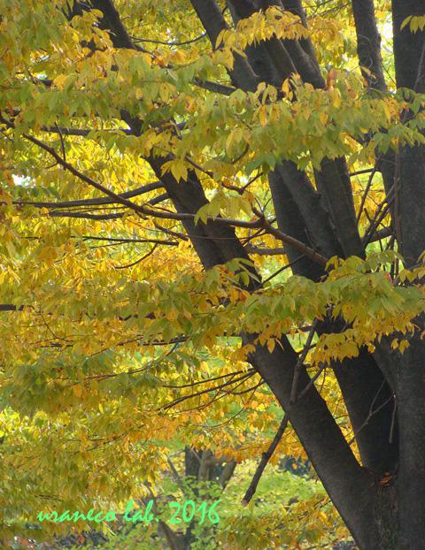11月1日木々色づく