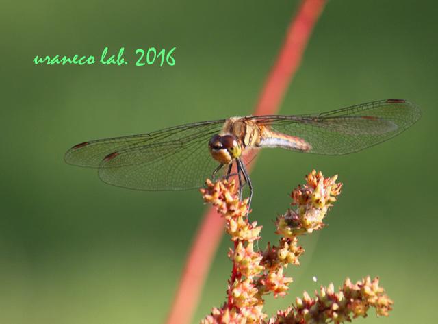 10月27日蜻蛉