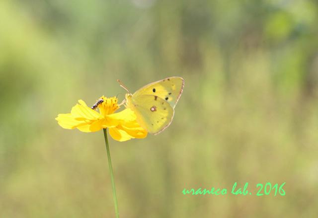 10月27日黄色い魔法
