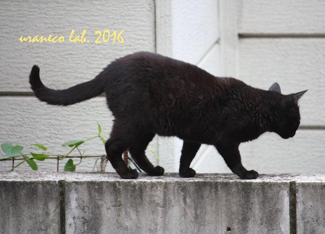 11月1日黒猫