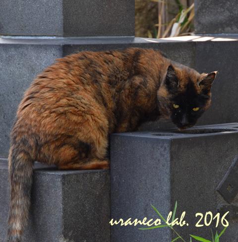 11月8日stray cat4