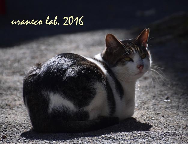 11月8日stray cat2