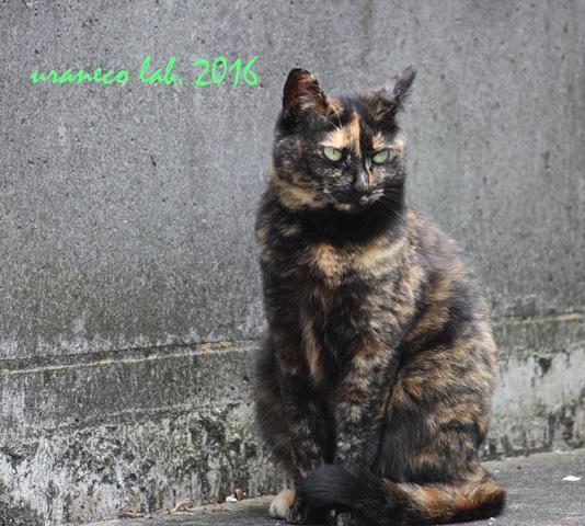 11月1日サビ猫