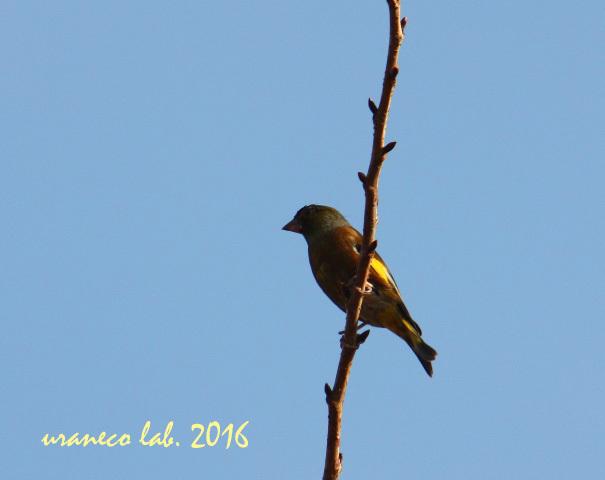 11月14日ナゾの鳥