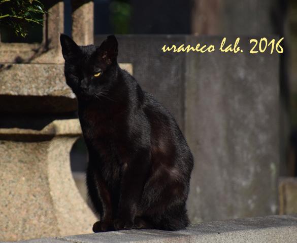 11月21日stray cat 7