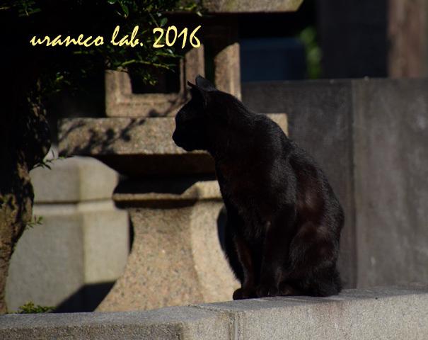11月21日stray cat 6
