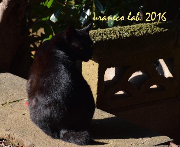 11月21日stray cat 5