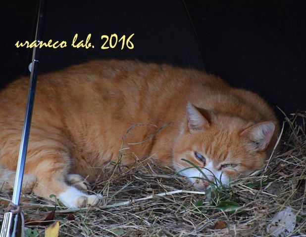 11月21日stray cat 4