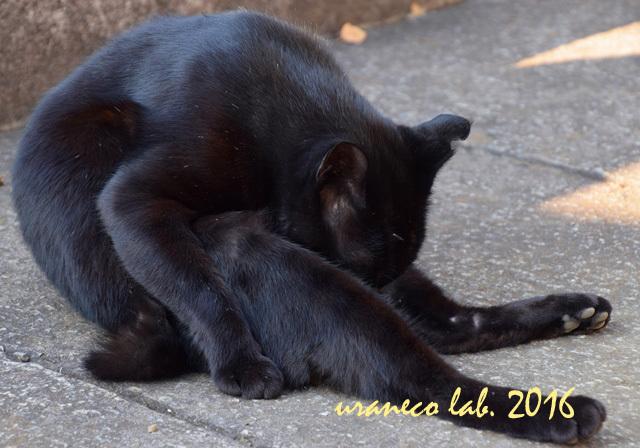 11月21日stray cat 3