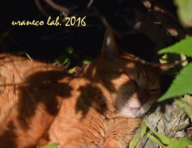 11月21日stray cat 2