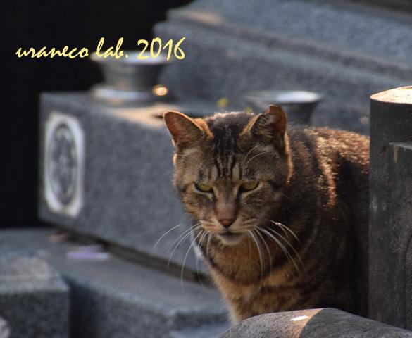 11月21日stray cat