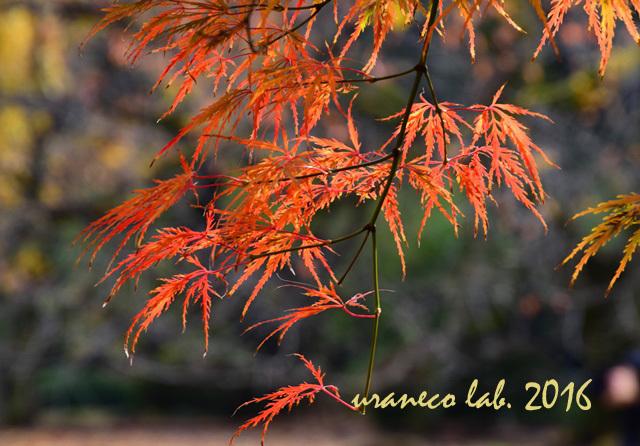 11月22日彩錦8