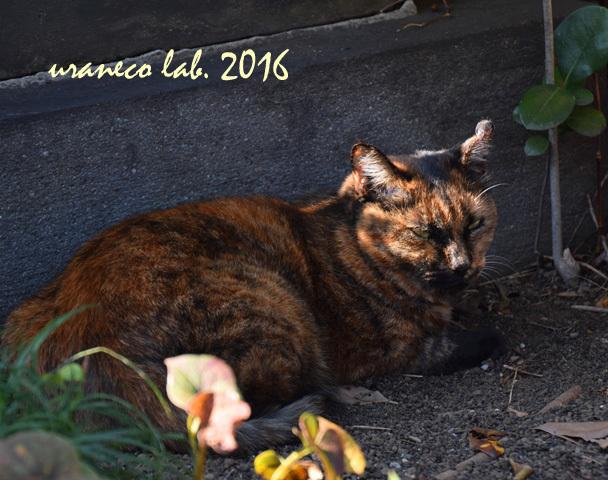 11月8日stray cat8