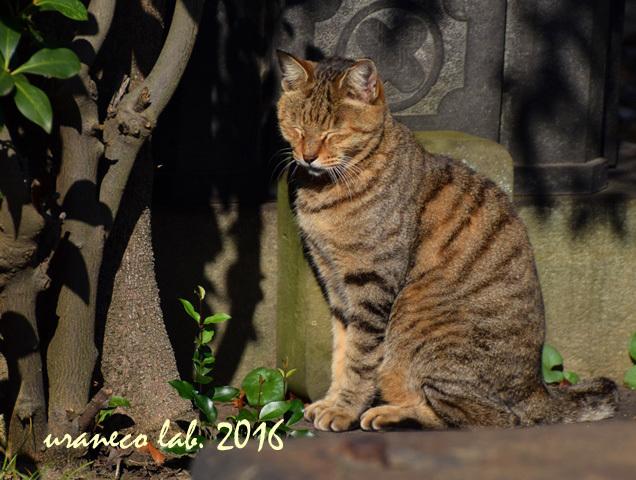 11月8日stray cat13
