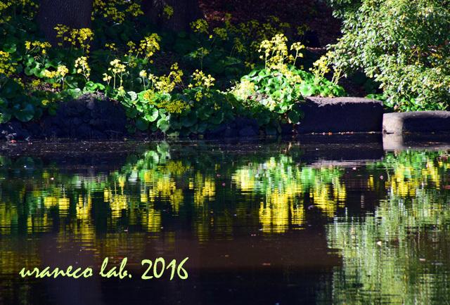 11月28日水鏡3