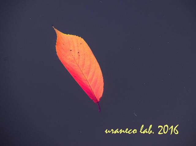 11月28日桜葉水画