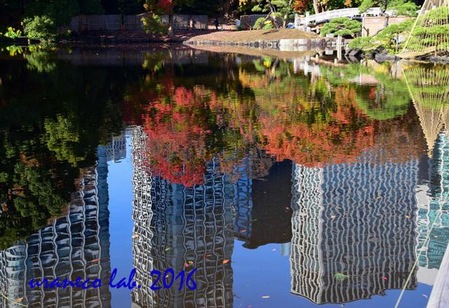 11月28日水鏡